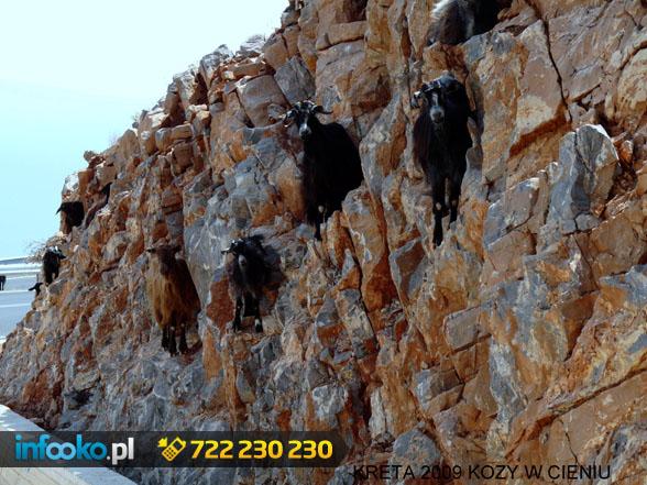 Kozy w cieniu