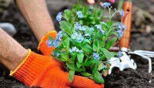 Sadzenie kwiatów w ogrodzie