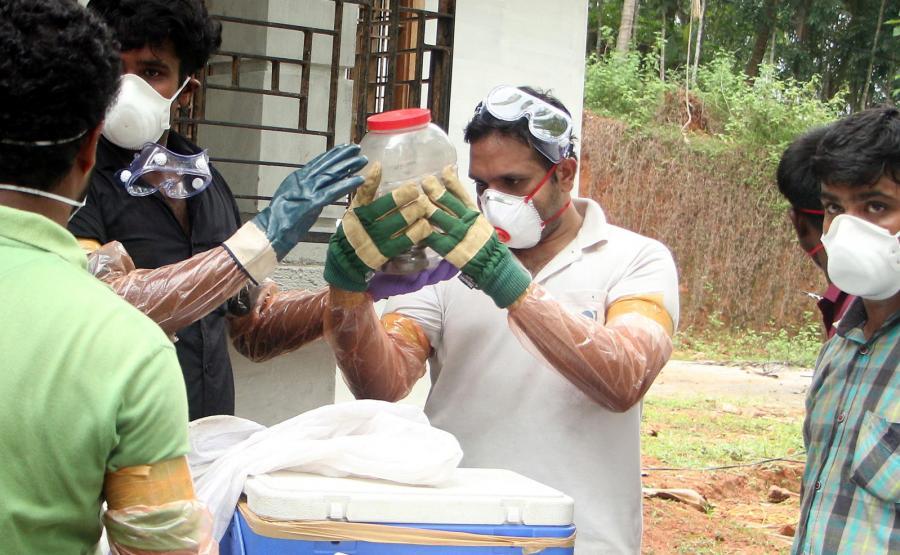 Odłowiony nietoperz podejrzewany o nosicielstwo wirusa Nipah - w słoiku