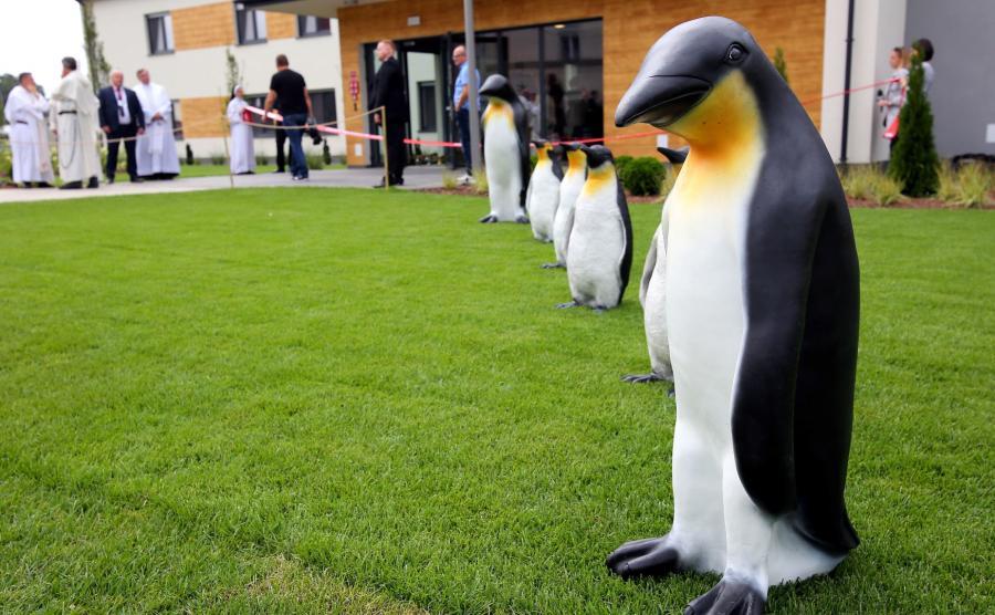 Pingwin to \