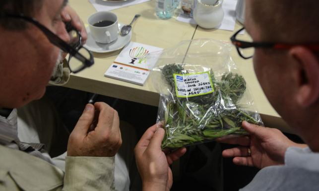 Legalna, ale nieosiągalna. Kto ciągle boi się medycznej marihuany?