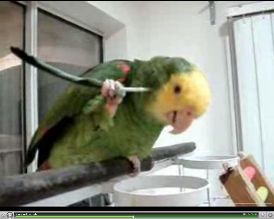 Co robi papuga którą swędzi za uchem?