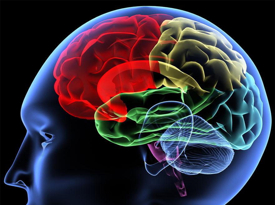 Polacy prowadzą pionierskie prace nad trójwymiarowym obrazowaniem mózgu
