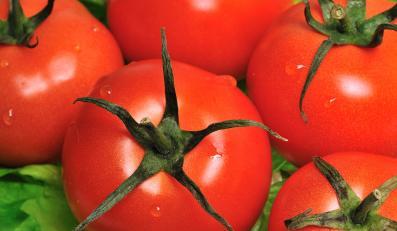 Surowe pomidory mogą być zainfekowane fekaliami ludzi albo zwierząt