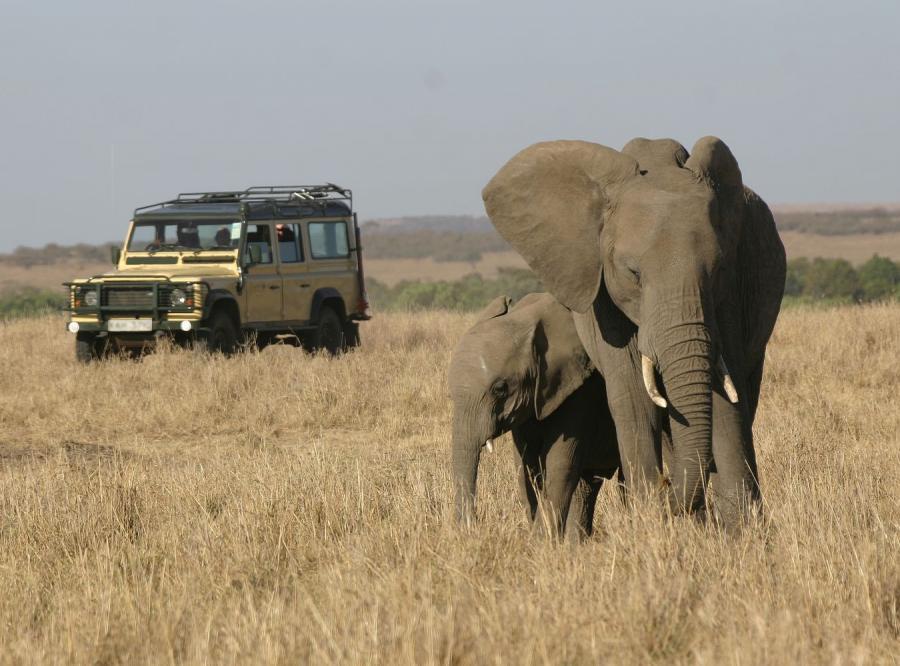 Słoń i samochód terenowy na sawannie w Afryce