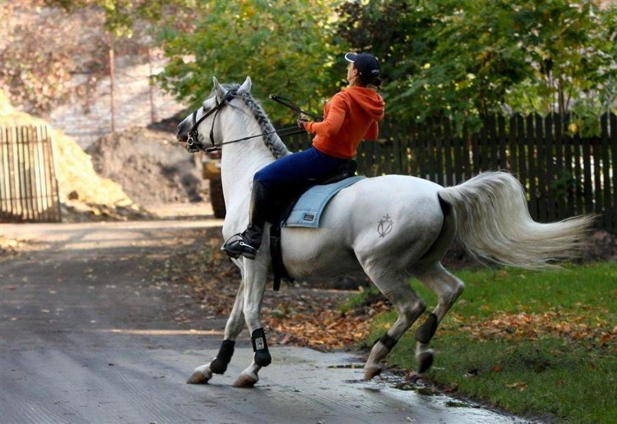 Kinga na koniu