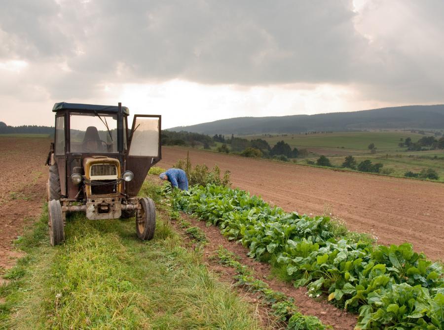 Rolnicy w Polsce coraz młodsi
