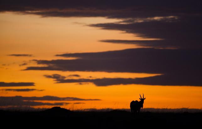 Kenia - dzika afrykańska przyroda