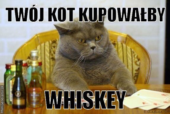 W światowy Dzień Kota Koty Zawładnęły Internetem Memy Zdjęcie 1